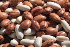 Beans legumes Stock Photos