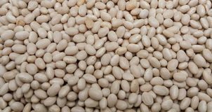 Beans legumes vegetables Royalty Free Stock Images