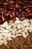 Beans and lentils Stock Images
