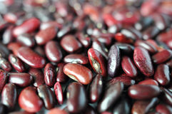 Beans macro Royalty Free Stock Images
