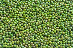 Beans mung Royalty Free Stock Photography
