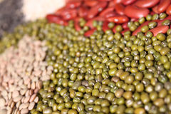 Beans, mung beans selective focus royalty free stock photography