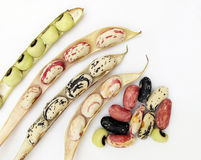 Beans in pods Royalty Free Stock Photography