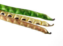 Beans and pods Stock Photos