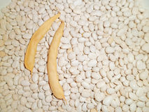 Beans and pods Royalty Free Stock Image