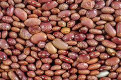 Beans, red pointed, pinto beans Stock Photos