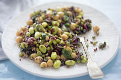 Beans, red quinoa, black rice, cranberries irish kale in light zingy lemon and mint dressing Stock Photography