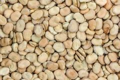 Beans seed texture Stock Image