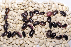 Beans shaped subtitles. Pinto beans shaped Life subtitles Royalty Free Stock Image