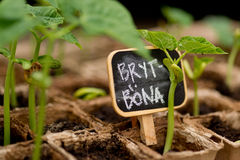Beans sprout with chalkboard label Royalty Free Stock Photo