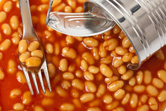 Beans in tin can. Photo shot of beans in tin can Royalty Free Stock Image
