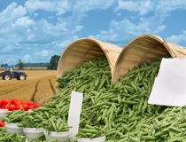 beans tomato baskets tractor and field Stock Photography