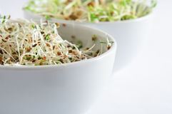 Beansprout Bowls Close Up Stock Photography