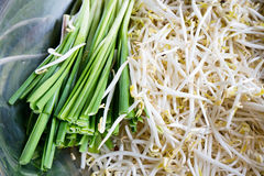 Beansprout fresco Fotos de Stock