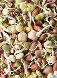 beansprouts混合有机 免版税库存照片