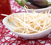 Beansprouts Royalty Free Stock Photography