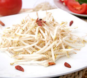 Beansprouts Royalty Free Stock Photos
