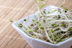 Beansprouts in a bowl Royalty Free Stock Images