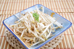 Beansprouts Royalty Free Stock Image