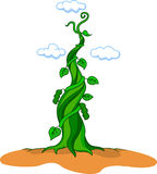 Beanstalk Stock Photography