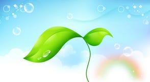 Beanstalk Stock Image