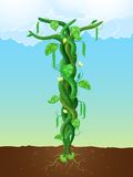 The beanstalk Royalty Free Stock Image