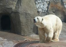Free Bear Royalty Free Stock Image - 10211656