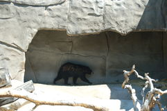 Bear. In cave Royalty Free Stock Image