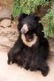Bear. Big bear sitting on the rock in zoo Stock Images
