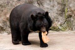 Bear. The big bear eats on a rock in a zoo Royalty Free Stock Photos