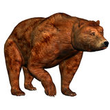 Bear. 3d render a bear than illustration Royalty Free Stock Image