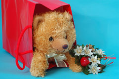 Bear. In the christmas box Stock Image