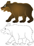 Bear. Clipart illustrations of a brown bear, isolated color drawing and black-and-white outline for a coloring page, on a white background Royalty Free Stock Images