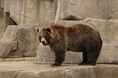 bear Στοκ φωτογραφίες με δικαίωμα ελεύθερης χρήσης