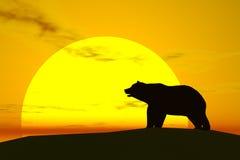 Bear royalty free stock photography