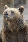 Bear. At the zoo Stock Image