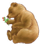 Bear. The brown bear holds a branch of a raspberry in a paw Stock Image