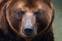 Free Bear Stock Photos - 6713403