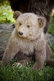 Bear. This is a stuffed bear Stock Images