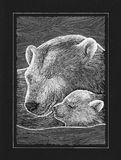 Bear. Hand work graphic, polar two bears illustration drawing, white pan on black paper Royalty Free Stock Photos