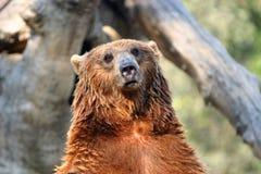 Free Bear Stock Photography - 971412