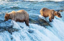 Bear on Alaska Royalty Free Stock Photos