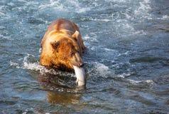 Bear on Alaska Stock Photography