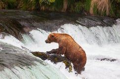 Bear on Alaska Royalty Free Stock Photography