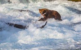 Bear on Alaska Stock Photos