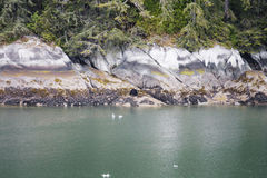 Bear on Alaskan River with Ice Flowing By Royalty Free Stock Photo
