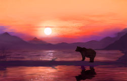 Bear. On the background of sunset, at sea Royalty Free Stock Image