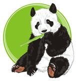 Bear with bamboo abd banner. Panda sit and eat bamboo next to an empty green icon Royalty Free Stock Photos