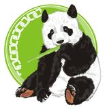 Bear and bamboo and round sign. Panda with bamboo and green round icon with white patten Royalty Free Stock Photography