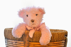 Bear in the basket Stock Image